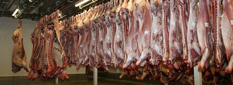 Abattoir et consommation de viande