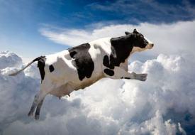 Vache qui saute