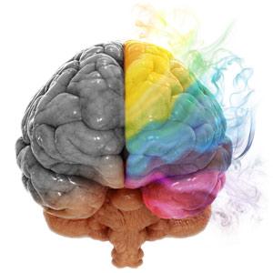 Illustration des zones mémorielles sur le cerveau humain