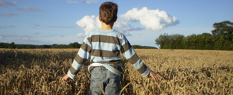 Éducation alimentaire de la graine à l'assiette : photographie du dos d'un garçon sui marche dans un champs de blés en carressant les épis avec ses mains.