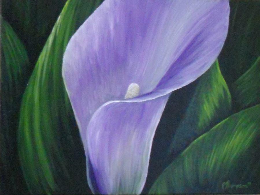 Purple Calla Lily