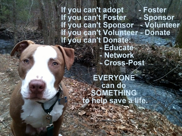 Everyone can do something for the animals at Regional. Adopt Foster Sponsor Donate Educate Network