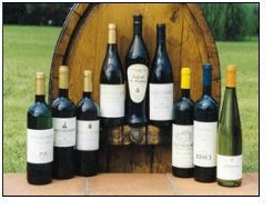 I vini marchigiani