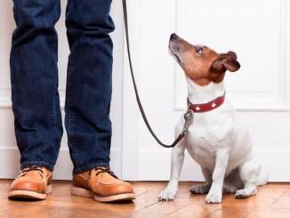 Бобик не вой: депутаты Новосибирска запрещают собакам лаять