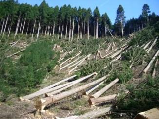 лісовим
