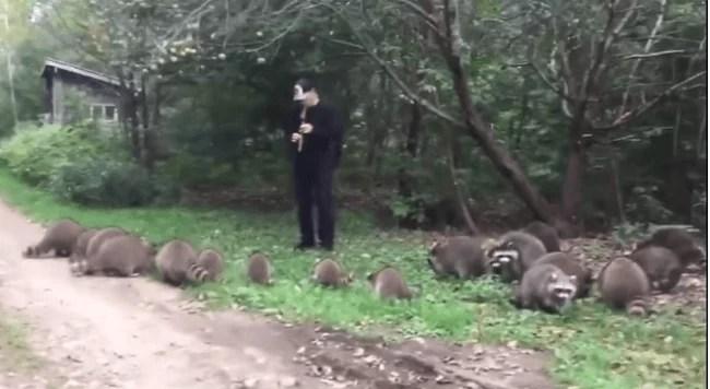 Кумедневідео: американець влаштував концерт для єнотів