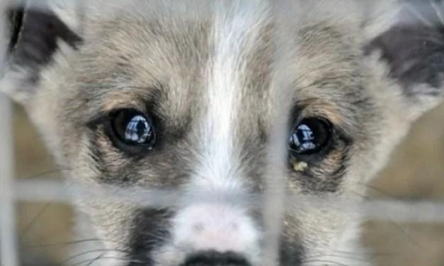 На Запоріжжі чоловік хотів приготувати собаку на новорічний стіл, сусіди врятували тварину