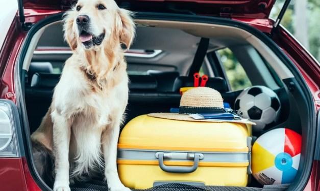 В Україні розширюється сервіс перевезення тварин: у яких містах запустять