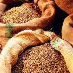 Державні запаси зерна розікрали, збитки складають понад 800 млн.