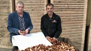 Photo of Eindelijk een duurzame oplossing voor bollenafval: tulpenpapier