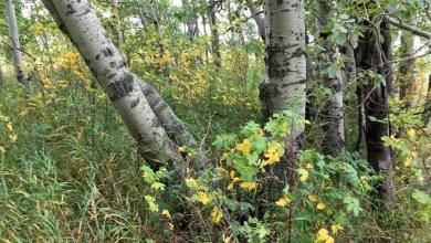 Photo of Kinderen en buurtbewoners planten Tiny Forest