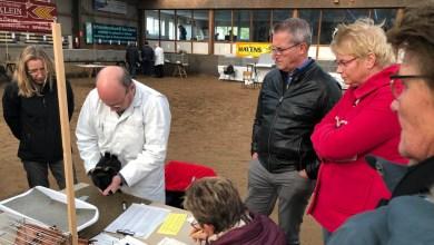 Photo of Wieringerlandshow blijft een publiekstrekker (video)