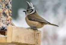 Photo of Vogelcadeautjes maken in de Helderse Vallei