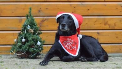 Photo of Jolly Christmas bij 't Schuthok