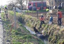 Photo of Paard met kraan uit moddersloot gered