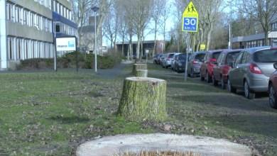 Photo of Veel bomen gekapt, maar Den Helder blijft groen