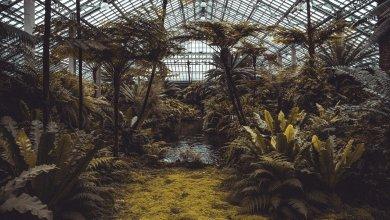 Photo of Miljardensteun nodig voor (glas)tuinbouw, bollensector en zaadveredelaars