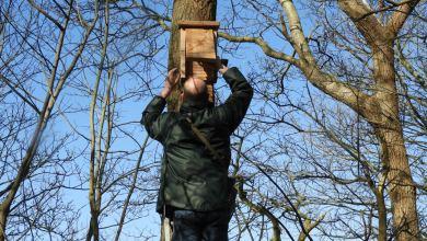 Photo of Nieuwe vleermuizenkasten voor Eendenkooi 't Zand