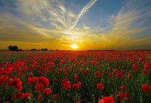 Photo of Den Helder wint strijd om zonnigste lente
