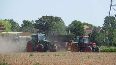 Photo of Bollenrooien in volle gang