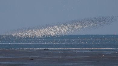 Photo of Zonsopkomst op vogelrijk Balgzand