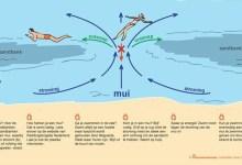 Photo of Muien in zee verraderlijk voor badgasten