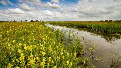 Photo of Nieuwe omgevingsverordening beschermt 32 bijzondere landschappen