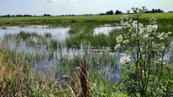 Mooie waters in de polder met de kleine berenklauw.