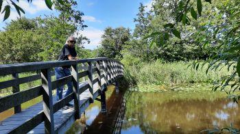 Een park met bruggetjes.