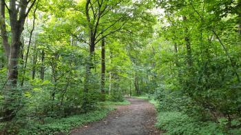 Wat een rust op dit bospad in het Dijkgatbos.