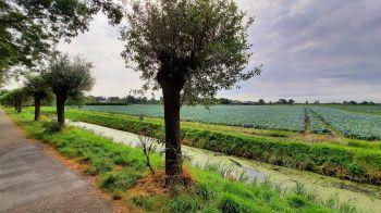 Een landschap met kool en knotwilgen (Foto: Jo Aggenbach)