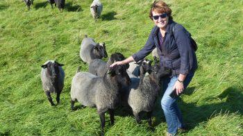 We zijn van de categorie aanhalige schapen