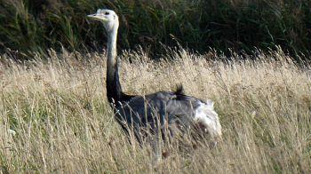 Het zijn mooie dieren deze emoe's