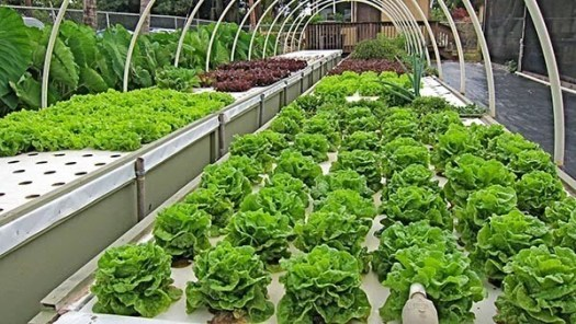 different types of vegetables planted artificialy