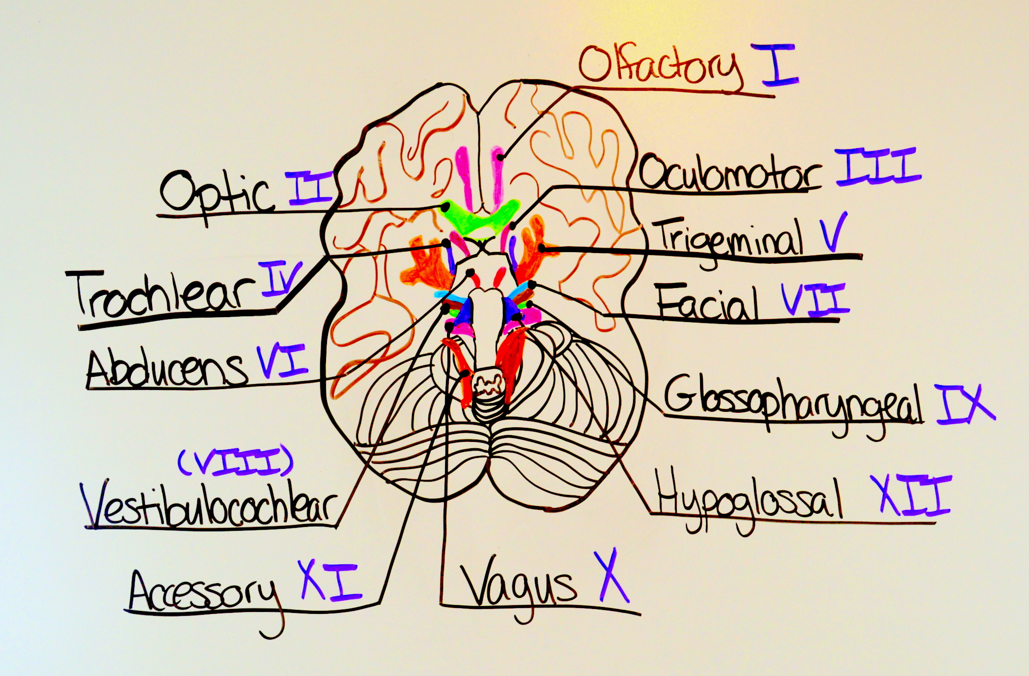 How To Remember The Cranial Nerves