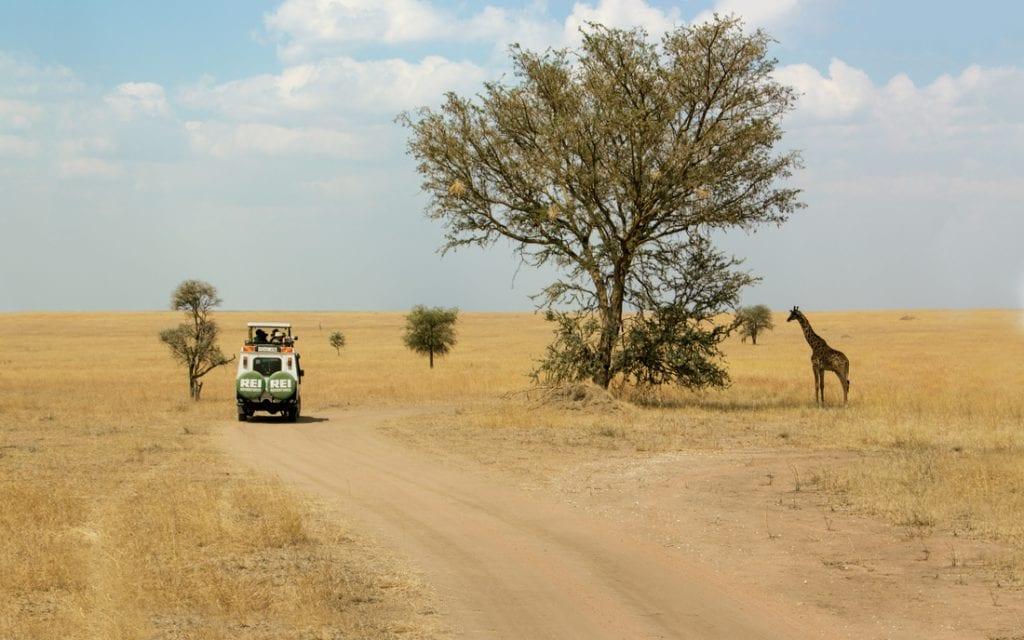 Tanzania safari.