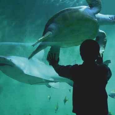 Aquarium Brittany
