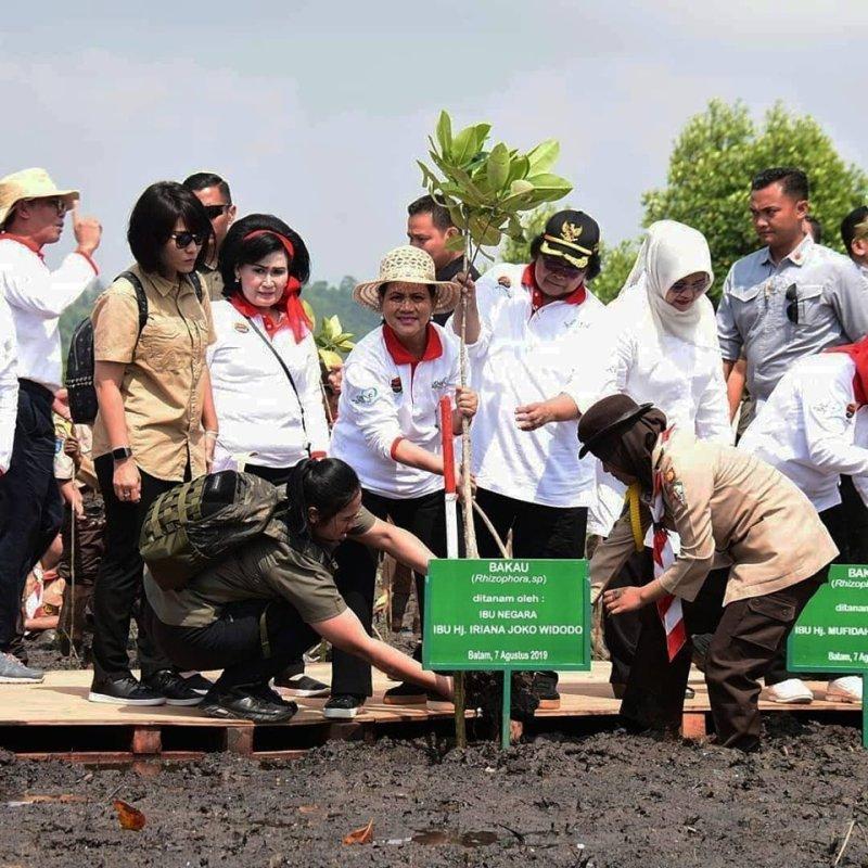 Bersama Masyarakat, Ibu Negara Dan Menteri LHK Tanam Bakau Di Batam