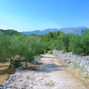 Dubrovnik en de Dalmatische Eilanden 8 dagen per vliegtuig