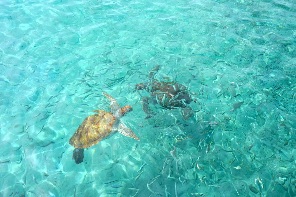 Schildpadden Curacao