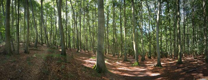 Krijtrotsen Rügen: Buchenwald in het Nationaal Park Jasmund