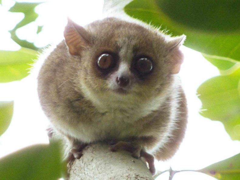 Wichtige Fakten zu Madagaskar und mir