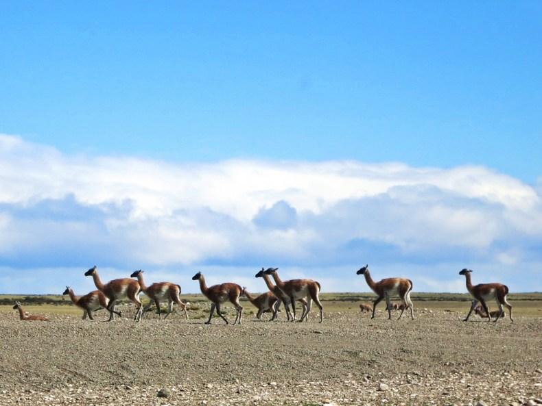 Mythos Patagonien