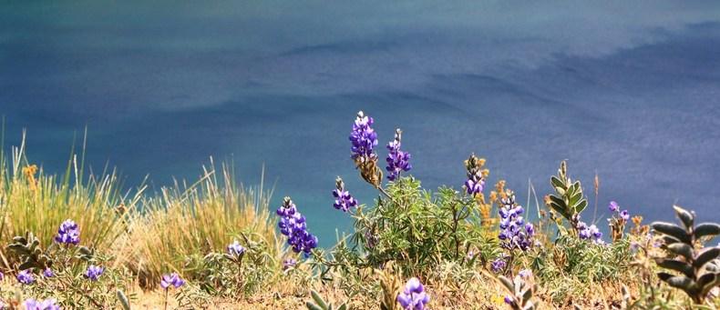 Dunkles Wasser, wilde Hunde und trinkfreudige Andenbewohner