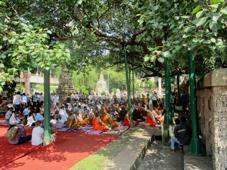 Unter Buddhas Baum