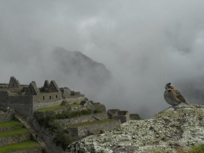 Machu Picchu – Verschollen in Wolken