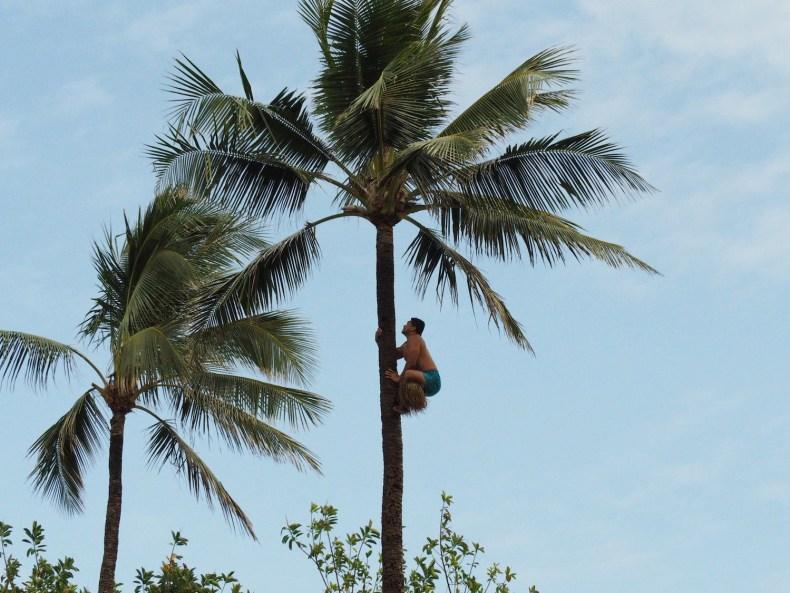 Auf der Suche nach dem Aloha – Teil I