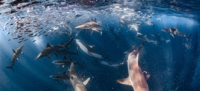 Haie, Fische und Wale