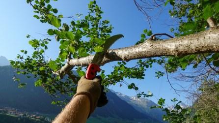 bergwaldprojekt-schweiz-val-medel - 25