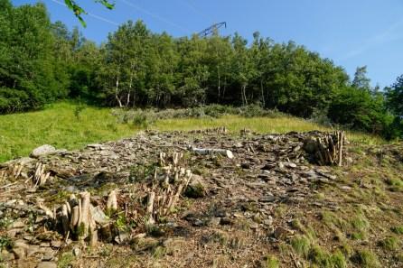 bergwaldprojekt-schweiz-val-medel - 4